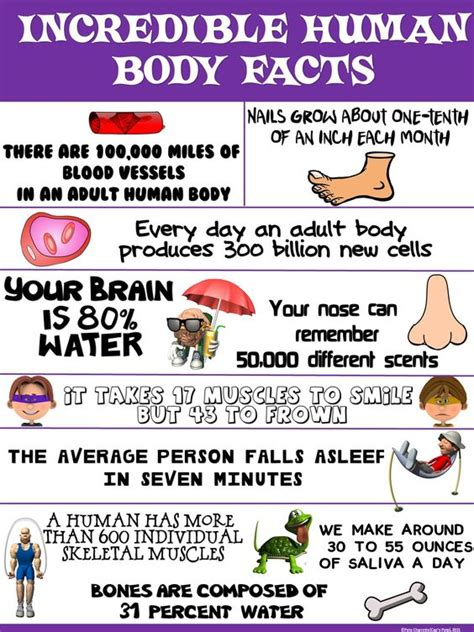 physics of the human lose weight for books health and science poster human facts