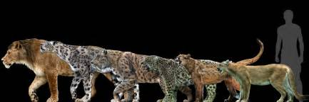 Jaguar Size Compared To Big Cats Into Big Poster By Dantheman9758 On Deviantart