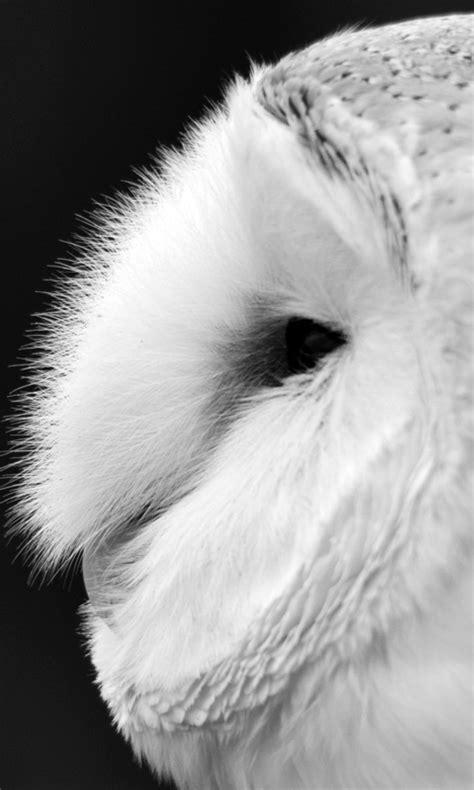 black and white owl wallpaper free barn owl black and white live wallpaper apk download
