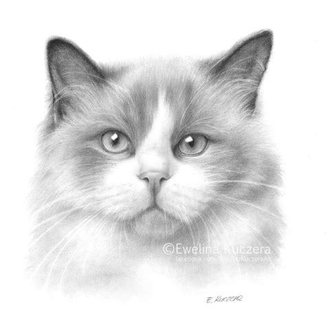 cat pencil drawing by kot filemon on deviantart