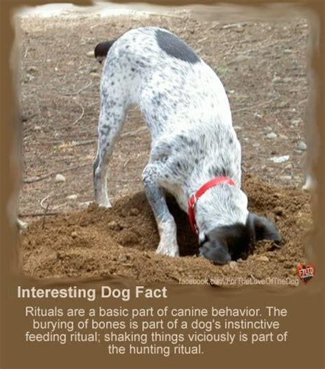 cool facts about dogs interesting facts so true 12