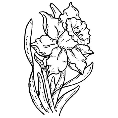 daffodil pictures to print coloring home