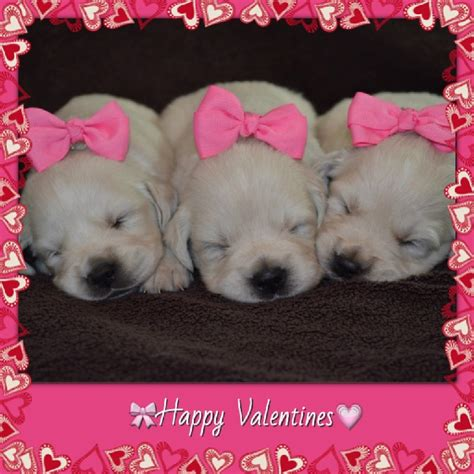 valentines puppy 1000 images about puppy on