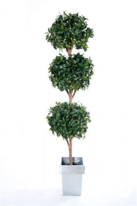 bay laurel topiary buy artificial 6ft bay laurel tree topiary