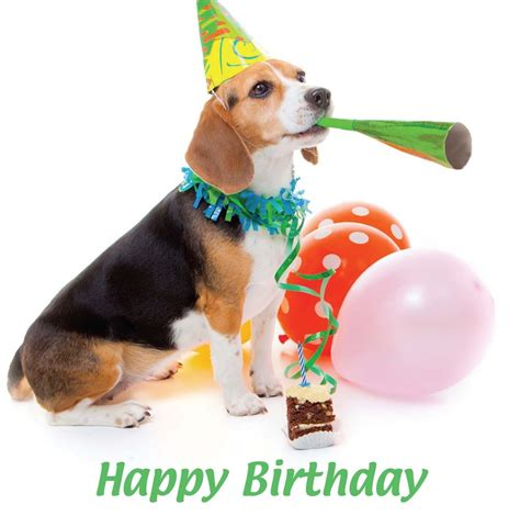 birthday card template dogs happy birthday blank card hat beagle puppy