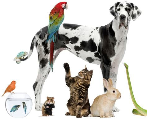 E Para Adocao From The Adoptable Pets Photo Pool by La Vida Media De Las Mascotas Dom 233 Sticas