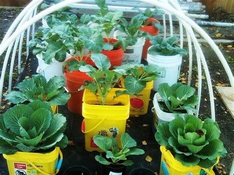 container gardening peppers beginner gardening tomato and bell pepper plants in