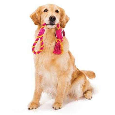 A Call For Model Pets by Pet Gift Ideas For S Day