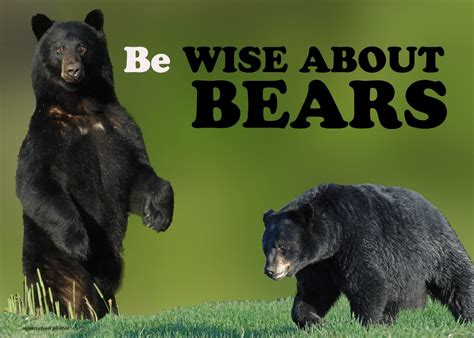 north american bear center why people fear bears are bears dangerous wise about bears