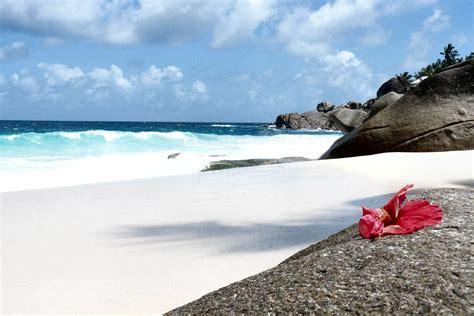 i fiori mare un fiore alle seychelles viaggi vacanze e turismo