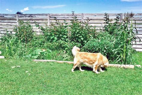 how to keep dogs out of garden how to keep your out of your garden lake country real estate in wisconsin