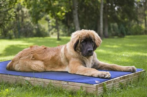 How To Prevent Mats In Dogs by 23 Summer Tips And Tricks To Keep Your Dogs Cool And Safe