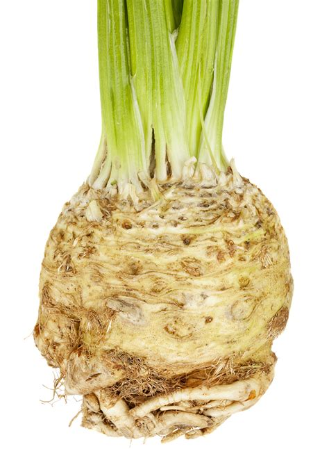 is celery a root vegetable how to grow celeriac harvest to table