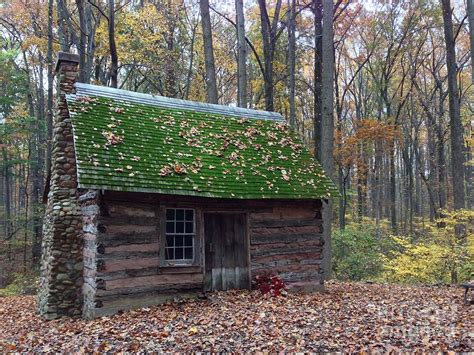 cabin in woods photograph by iris posner