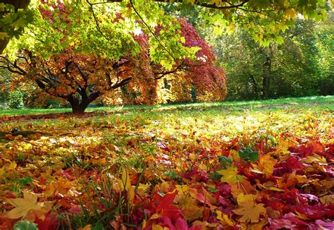 Autum In autumn pictures images graphics for whatsapp