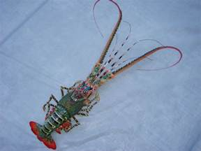hand made bamboo model big lobster for wall decoration ebay
