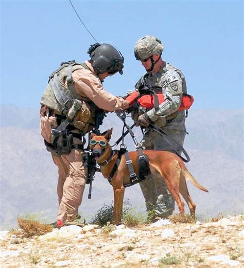 army dogs images