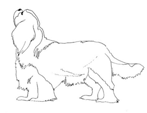 coloring pages of cavalier king charles spaniels cavalier coloring pages