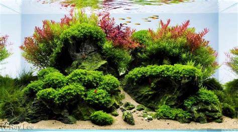 nudo akvaryum bitki akvaryumu nudo konsept akvaryum dizayn