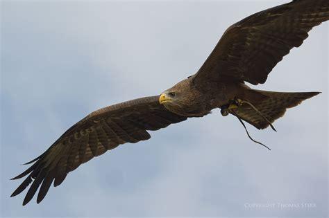 center for birds of prey awendaw south carolina