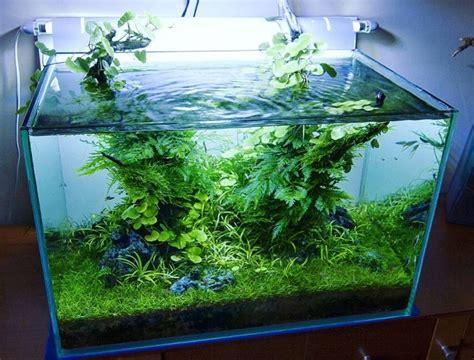 pengertian aquascape contoh   membuatnya