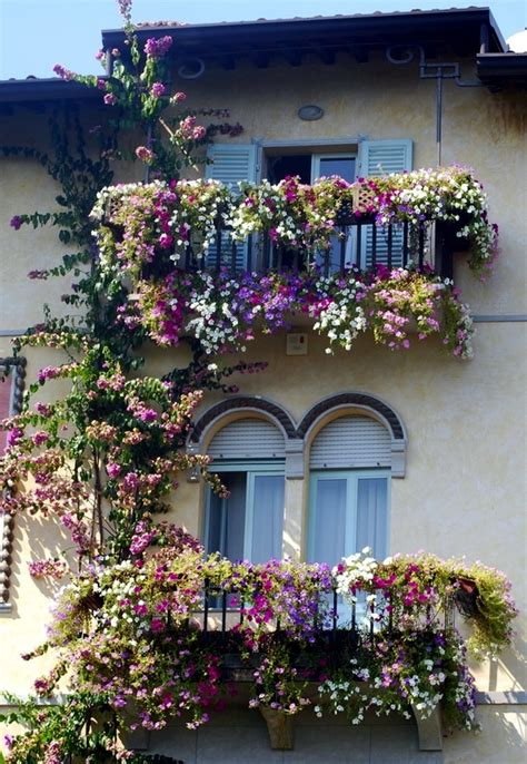 balcony flowers climbing plants on balconies and terraces screening and