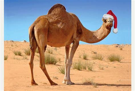a moroccan festivus caravan驼队