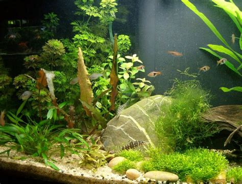 biotope aquascape 34 best images about southeast asian blackwater biotope on