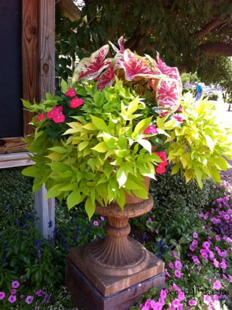 Potted Gardens Ideas 114 Best Images About Shade Container Gardens On Pinterest Window Boxes Japanese Painted Fern