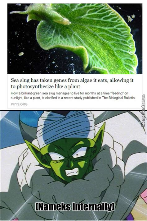 Piccolo Meme - pope piccolo dragonball z memes best collection of funny
