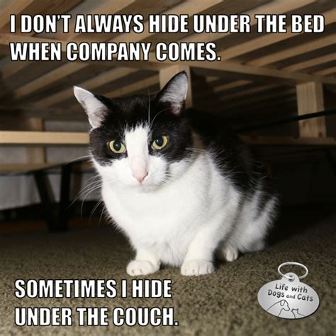 new cat hiding under bed i don t always hide under the bed when company comes mostinterestingcatintheworld