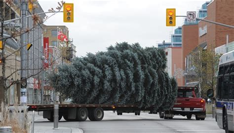 city of kitchener garbage collection curbside tree collection begins in cambridge