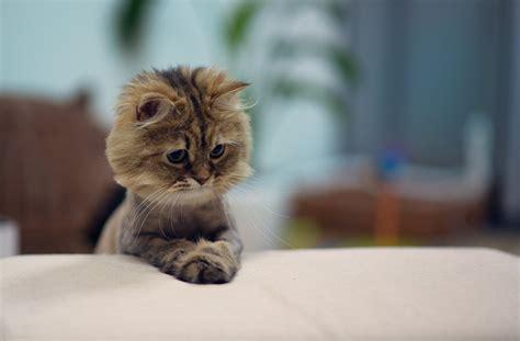 imagenes ironicas de gatos las mejores 40 im 225 genes de gatos de todos los tiempos
