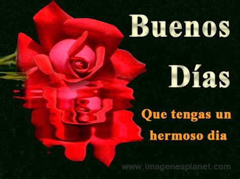 Imagenes De Buenos Dias Con Rosas De Amor | 25 best ideas about buenos d 237 as hermosa on pinterest