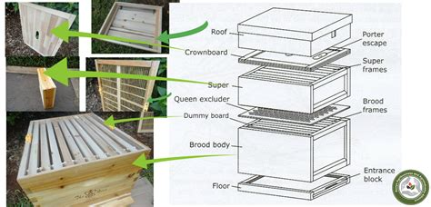 bee hive diagram wiring diagram schemes