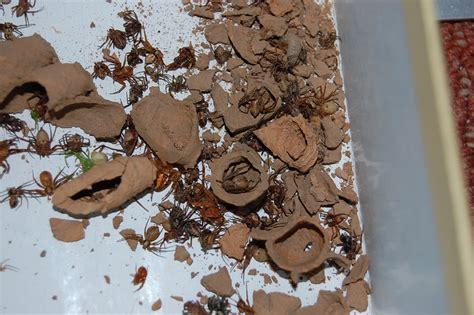 wespenplage in der wohnung was haltet ihr wespen seite 24 allmystery