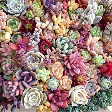 cute succulents la gabicueva osita mimi succulents soo cute