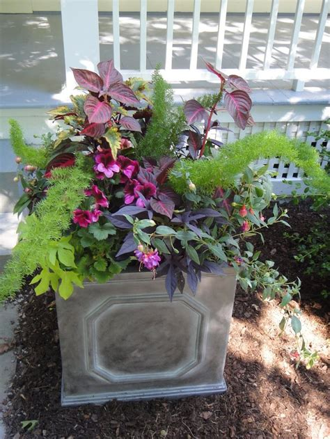 container gardens for shade 17 best images about shady border on gardens