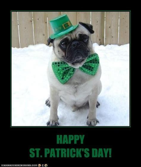 Funny St Patrick Day Meme - st patrick 39 s day pug