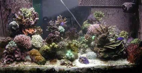 Turbo Jet Tj2600 Aquarium Water filtration mr 2 beckett injection skimmer my reef creations activated carbon filter