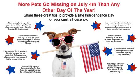 how to comfort dogs during fireworks 5 things humans do to make 4th of july fireworks fear
