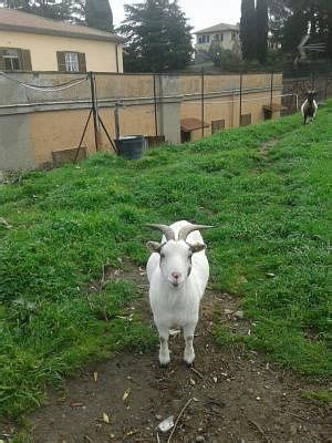 animali da cortile gratis animali da cortile e stalla annunci animali