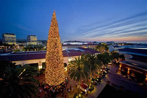 christmas trees irvine caruso s oc happenings central county