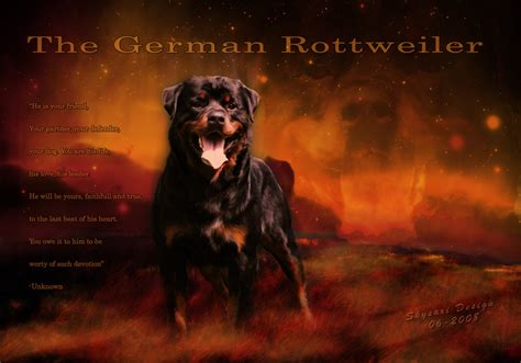 buy rottweiler from germany german rottweiler by skysari on deviantart