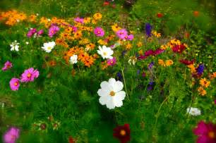 Flower Garden Seeds Higgledy Garden