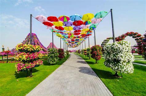 Dubai Flower Garden by Dubai Miracle Garden World Flower Garden