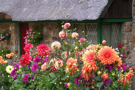 Cottage Of Flowers by Cottage Flowers Photo Gar Cropser Photos At Pbase