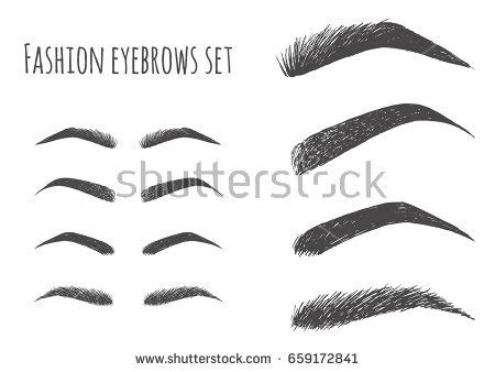 types forms eyebrows vector eeybrows vector stock vector eyebrows stock images royalty free images vectors