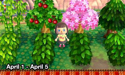 acnl starts cognitive dissonance i made a guide because all the bush