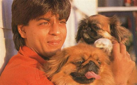 Srk House bollywood celebs with their adorable pets